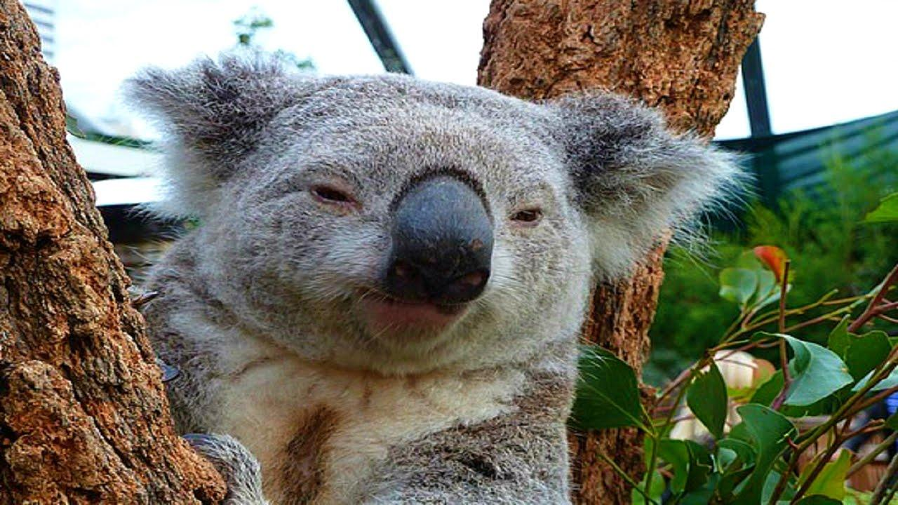 Eucalyptus Tree Facts For Kids
