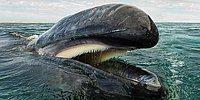 Красота и умиротворенность китообразных в захватывающих дух фото