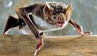 15 Interesting Facts About Bats You've Never Heard Before!