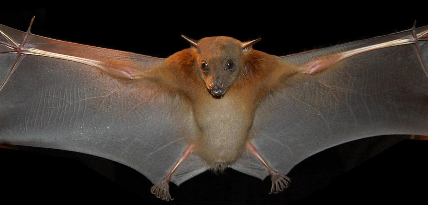 15 interesting facts about bats youve never heard before onedio they do know about oral sex biocorpaavc