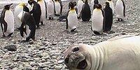 18 смешных селфи от животных, которые заставят вас увидеть себя со стороны