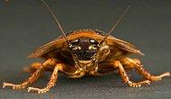 14 Puzzling Facts About Cockroaches You Should Hear!