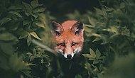 Невероятно близкие фото лесных жителей от друга всех зверей