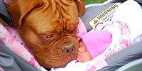 17 фото, доказывающих, что собаки - самые преданные друзья