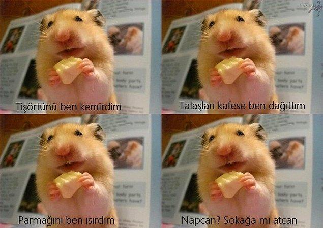 8. Hamster
