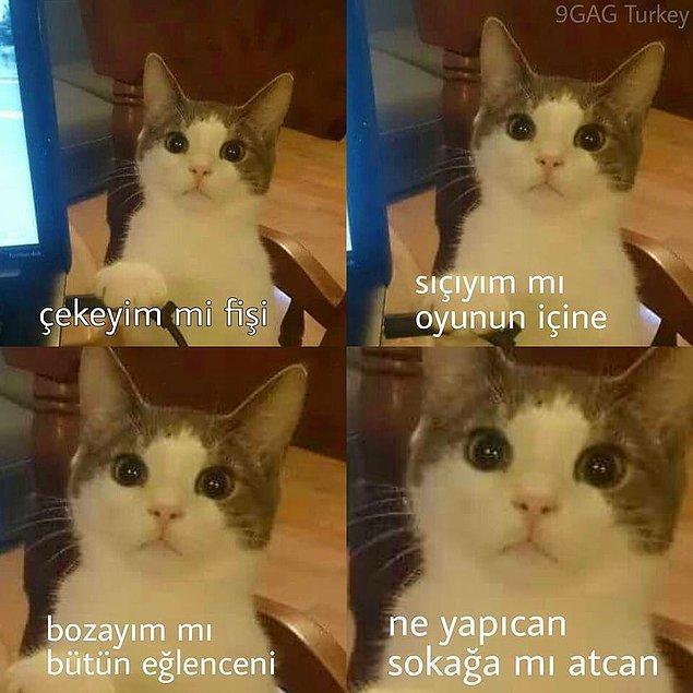 7. Kedi