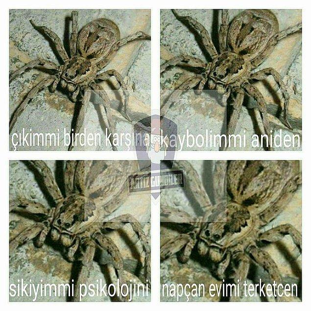13. Örümcek