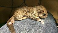 Heartwarming Story Of Jeff And Biscuits, The Flying Squirrel!