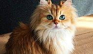 Meet Smoothie: The Prettiest Cat You've Ever Seen To This Day!