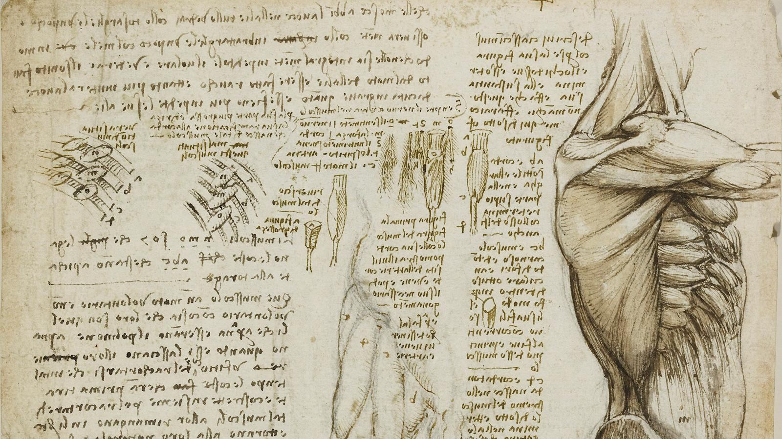 19 Drawings That Prove Leonardo Da Vinci Was Way Ahead Of His Time