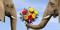 16 забавных фактов, доказывающих, что слоны похожи на людей