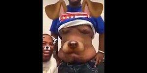 Фильтр Snapchat сделал из живота парня собаку