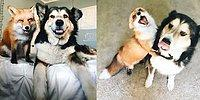 26 Pictures Showing That Dogs Are The Friendliest!