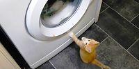 Помочь стиральной машине - их долг 😂