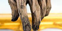 «Деревянные» скульптуры из керамики - иллюзия обмана