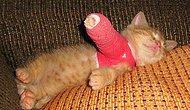 Sad But Cute: 19 Mischievous Baby Animals With Broken Legs
