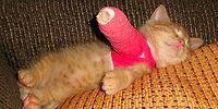 Sad But Cute: 19 Mischievous Baby Animals With Broken Legs