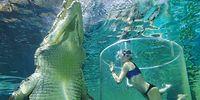 Путешественница оказалась в воде с 5-ти метровым крокодилом!