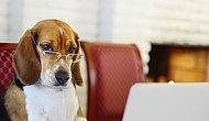 Science Says Dogs Almost Fully Understand Human Language!