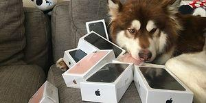 The Son Of A Chinese Millionaire Just Bought Eight iPhone 7s For His DOG!