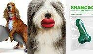 11 гиперстранных продуктов для животных