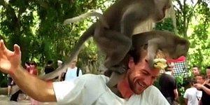 Бесстыжие обезьяны занимаются сексом прямо на голове туриста