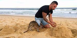 Когда ваш лучший друг... кенгуру!