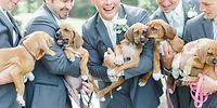 Look Who Crashed This Wedding With Their Tiny Paws!