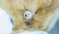 24 UnBEARably Adorable Pictures of Momma Bears With Their Cubs