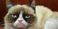Сердитый котик Grumpy Cat теперь увековечен в Музее мадам Тюссо