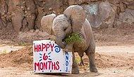These Adorable Baby Elephants Are Having Fun Like There's No Tomorrow!