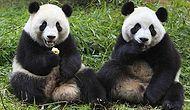 17 Comfort-Loving Animals Sitting Just Like Humans!