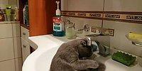 Эта кошка любит по утрам принимать душ в раковине