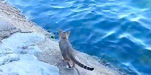 This Clever Fishing Cat Catches Its Own Dinner!