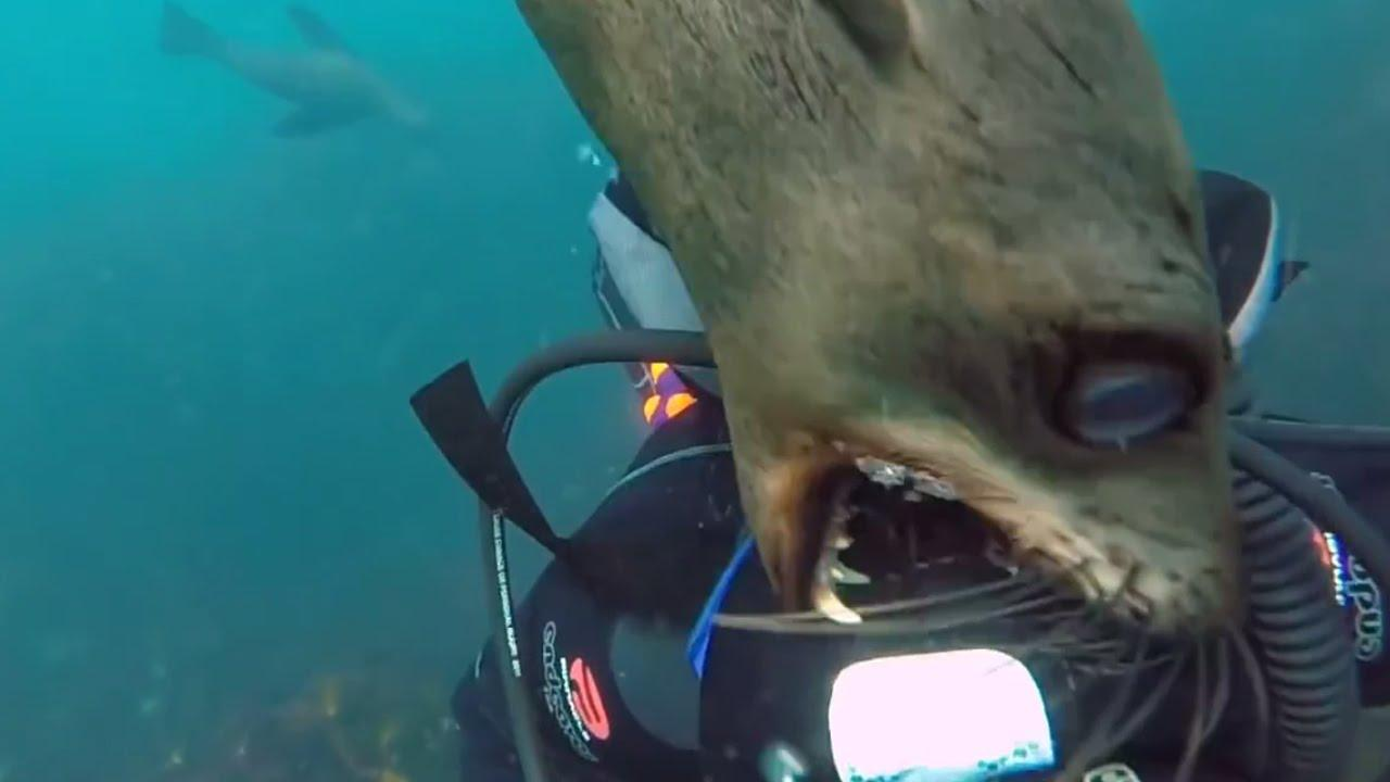 30 People Who Got Attacked By Dangerous Marine Animals ...