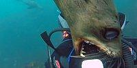 30 People Who Got Attacked By Dangerous Marine Animals