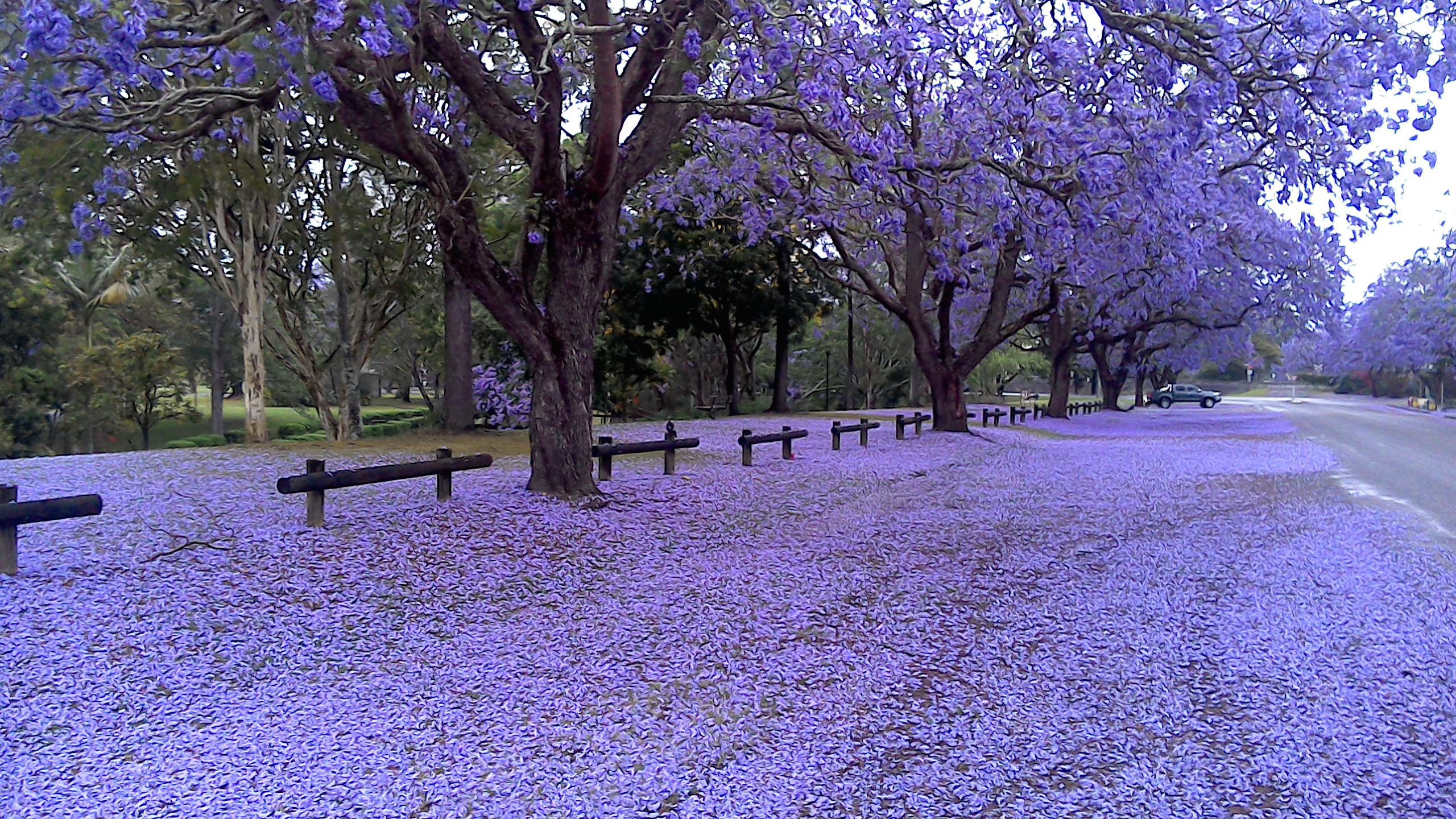 Take Another Look At Buenos Aires With Its Dazzling Jacaranda Trees