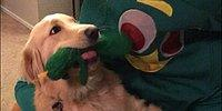 Что будет с вашей собакой, если вы переоденетесь в ее любимую игрушку?