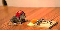 Как поймать мышь, при этом не убивая её