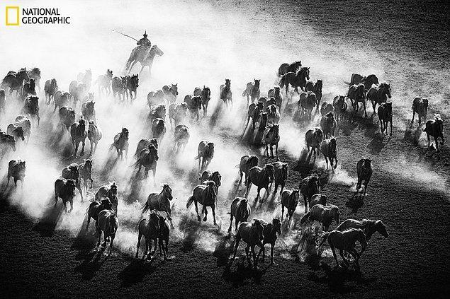 12. Çin'de koşan görkemli atlar.