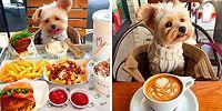 Adorable Rescued Dog Goes To Pet-Friendly Restaurants Every Day!