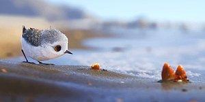 "Pixar's New Short ""Piper"" Will Surely Melt Your Heart!"