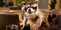 """18 гифок из серии """"Если бы у животных были профессии"""""""