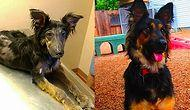 36 Rescue Dog Transformations That Will Melt Your Heart Right Away!