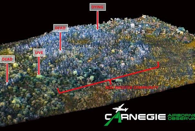 Peki, neler demiş Gregory Asner? Bu makine nasıl ölçüyormuş ağaçları?