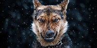 10 Impressive Animal Portraits From Ukrainian Photographer