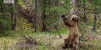 Что делает медведь, когда у него спинка чешется? 😅
