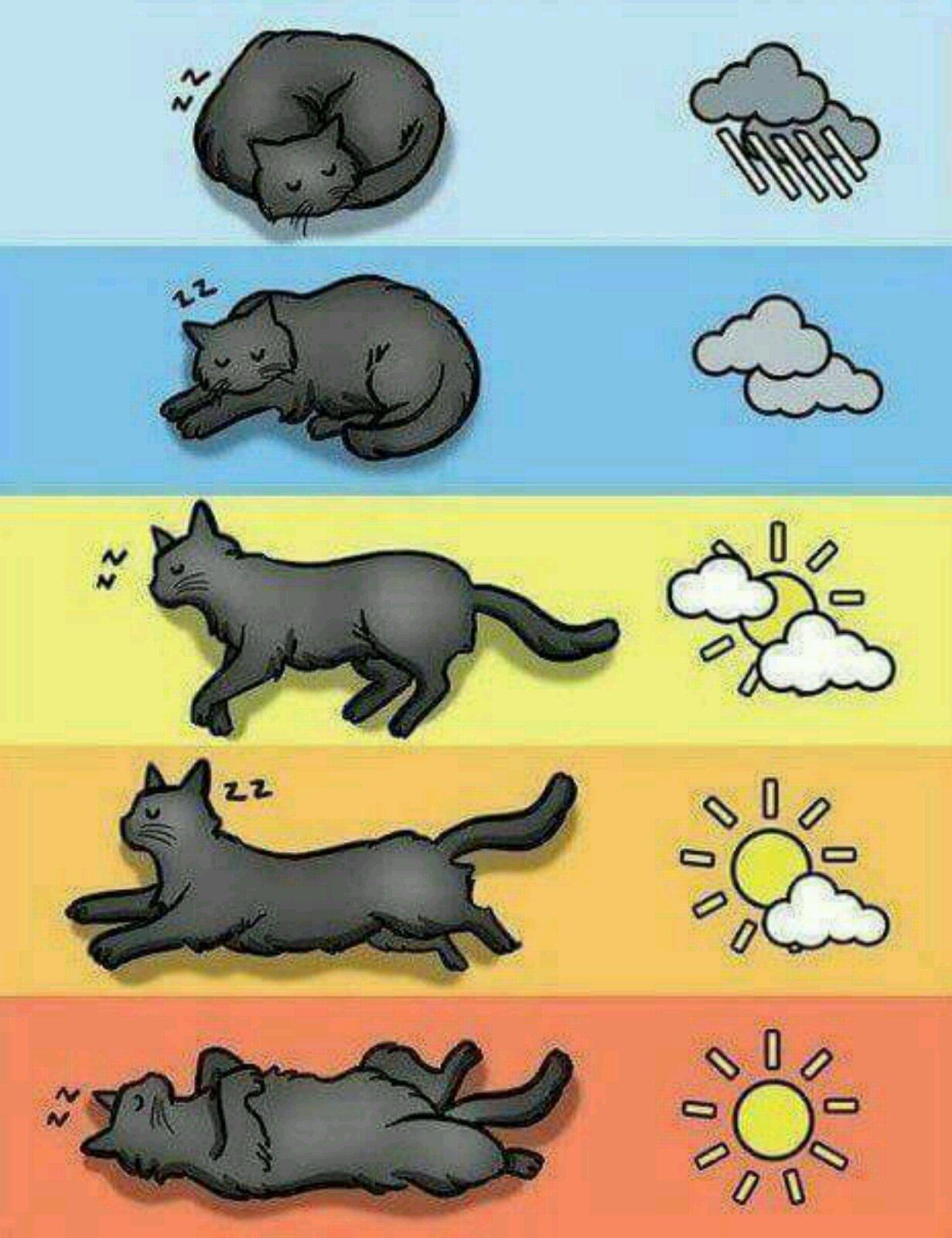 игра погода в кошках на завтра лицевой стороне открыток