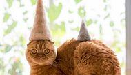These Cats Wearing Hats Made From Their Own Hair Is The Cutest Thing On The Internet Right Now