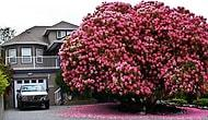 15 Amazing Trees That Are Pushing The Boundaries Of Beauty!
